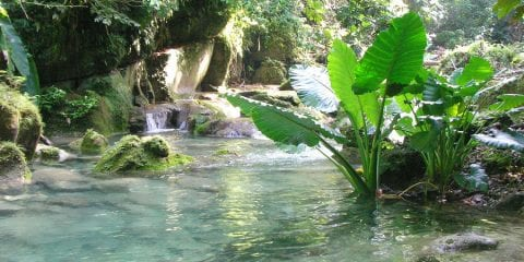 watervallen jamaica reach falls plants