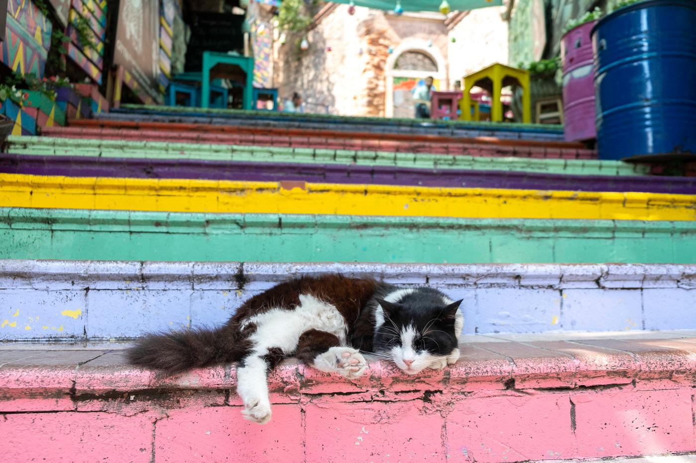 weekendje in istanbul katten