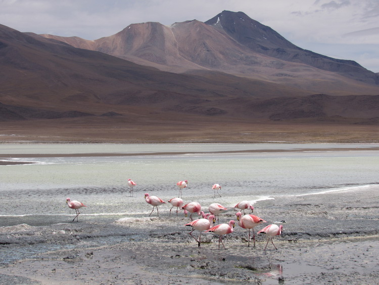 wereldreis 10 maanden anne Atacama woestijn