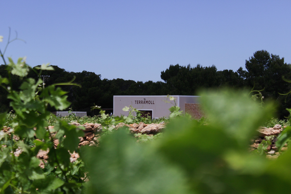 wijngaard formentera tips