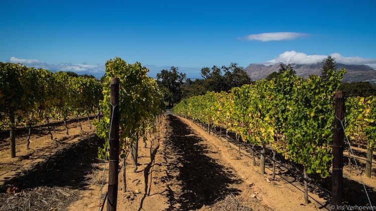 wijnlanden constantia kaapstad tip