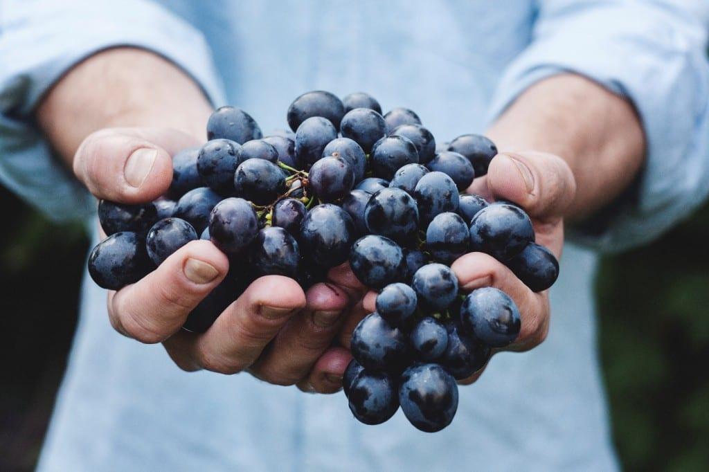 werken met fruit
