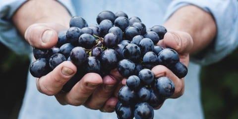 wijnliefhebbers zuid afrika