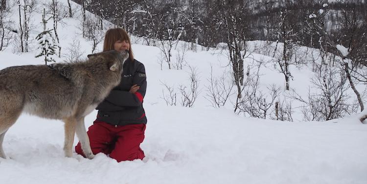 kussen wolven