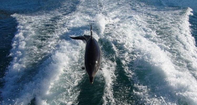 zwemmen dolfijnen nieuw zeeland tips abel tasmanpark